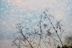 Silhouette of tree branches with sunset and snow flakes effect. stock photos