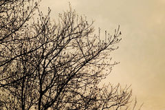 Silhouette of tree branches, sunset toned stock images
