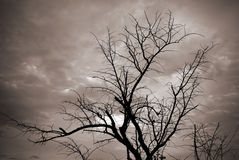 Silhouette of tree branches Stock Photo