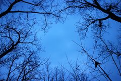 Silhouette of tree branches under blue sky. Stock Image