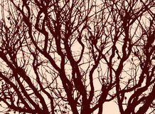 Silhouette of a tree branches Stock Image