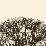 Silhouette of the tree branches Stock Images