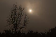 Silhouette tree brunch in winter Stock Image