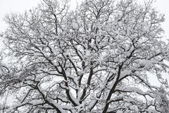 Silhouette of a tree close-up. Winter time Royalty Free Stock Photos