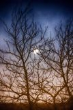 Silhouette of a tree and a cloudy night reflected in a puddle. A picture of a silhouette of a tree and a cloudy night reflected in a puddle royalty free stock photo