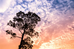 Silhouette of Tree with cloudy sky Royalty Free Stock Images