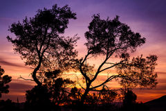 Silhouette of tree with colorful sky in the backgroun Royalty Free Stock Images