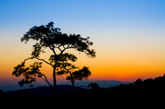 Silhouette tree on colorful sky at sunset time. Traveling outdoor national park Stock Images