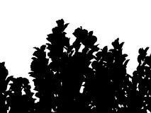 silhouette of tree with copy space Stock Image