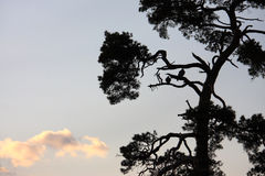 Silhouette of tree and couple of birds Stock Photography