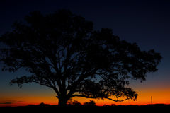 Silhouette of a tree at dusk. Stock Photos