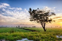 Silhouette of tree in the edge of vast rice field. Behind it is line of mountain, hill, cloud and sun Stock Photography