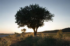 Silhouette Tree At The Evening Royalty Free Stock Photos