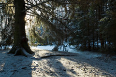 Silhouette of the tree in forest at winter Royalty Free Stock Photography