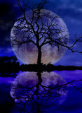 Moon and tree. Silhouette of tree in front of moon with water reflection over lake Royalty Free Stock Images