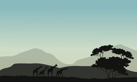 Silhouette of tree and giraffe Stock Image