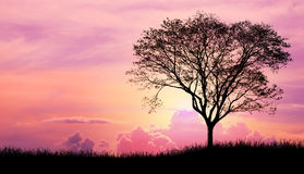 Silhouette tree and grass in Pink purple sky cloud background Royalty Free Stock Photo