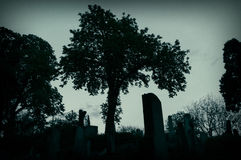 Silhouette of tree in graveyard Stock Photography