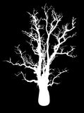 Silhouette of a tree Royalty Free Stock Photography