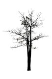 Silhouette tree isolated Royalty Free Stock Images