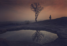 Silhouette - Tree and its reflection Royalty Free Stock Images