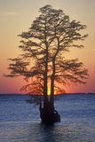 Silhouette of tree in James River, Jamestown VA Stock Photo