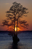 Silhouette of tree in James River, Jamestown VA Stock Photography