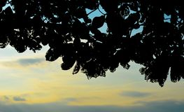 Silhouette of tree with sunset sky background Royalty Free Stock Images