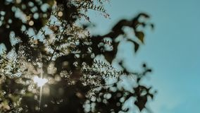 Silhouette of a Tree Leaves stock image