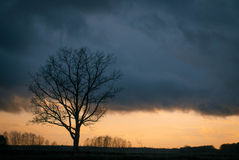 Silhouette tree without leaves Royalty Free Stock Photos