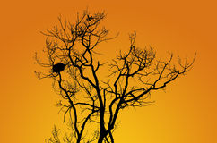 Silhouette tree Stock Photos