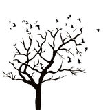Silhouette of a tree without leaves and birds flying Royalty Free Stock Images