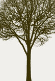 Silhouette of a tree without leaves Royalty Free Stock Photography