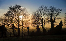 Silhouette of tree line against Autumn sunset Royalty Free Stock Images