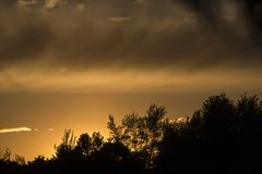 Silhouette of tree line, golden sunset royalty free stock photo