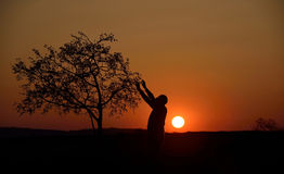 Silhouette of a tree and a man in sunset background Royalty Free Stock Photo