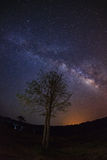 Silhouette of Tree and Milky Way at Phu Hin Rong Kla National Pa Stock Photography