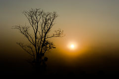Silhouette of a tree. Stock Image