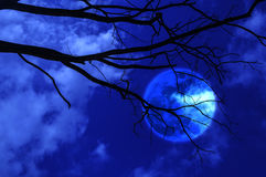 Silhouette tree moon. Silhouette tree branch with blurred full moon and clouds on night sky background Stock Photo