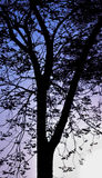 Silhouette tree in the morning of the city stock photo