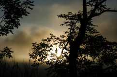 Silhouette tree on morning before sun up. Stock Photography