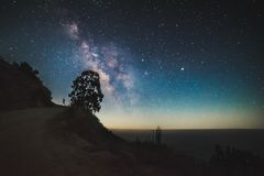 Silhouette of Tree on Mound during Night Time Stock Image