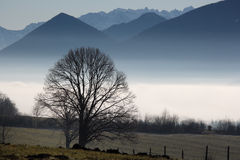 Silhouette of tree and mountains Stock Photo