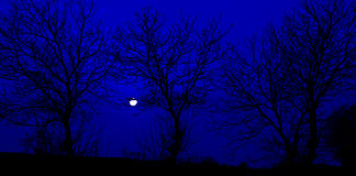 Silhouette,tree,mystery,dark. Black silhouettes of trees into the night Stock Image