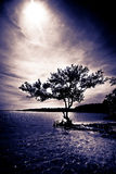 Silhouette of a tree with ocean view Stock Images