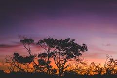 Silhouette of Tree during Orange Sunset Stock Image