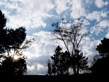 silhouette tree over dramatic cloud on the sky Royalty Free Stock Images