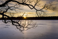 Silhouette of tree over frozen lake at sunset Royalty Free Stock Images