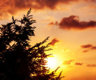 Silhouette of tree over sunset Royalty Free Stock Photos