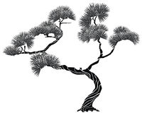 Silhouette on tree pine Royalty Free Stock Photos
